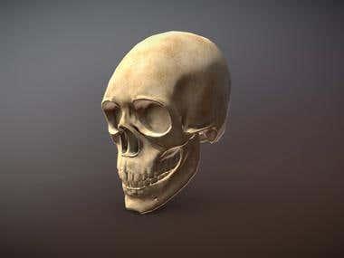 Skull - Low Poly - Anatomy