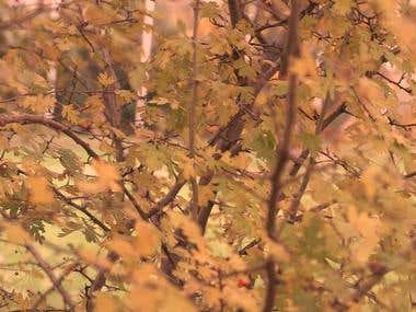 Vintage Shop Autumn Promo Fashion Video