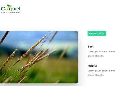 Carpel Seeds