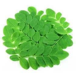 Growing Super Food (Moringa) in Your Garden