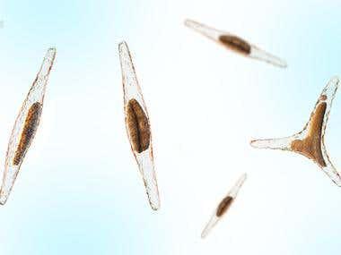 Microalgae - 3d illustration