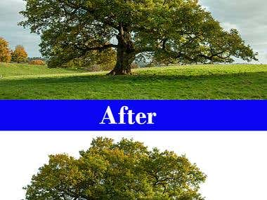 Tree background removal
