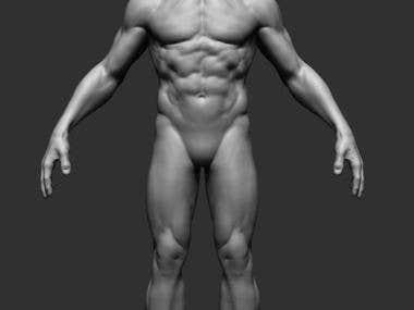 3d model human