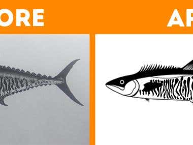 Vector / Illustration design