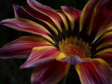 flores, plantas y abstractos