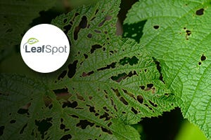 LeafSpot - Recognize any leaf or plant