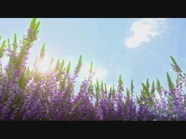 3D Animation_1