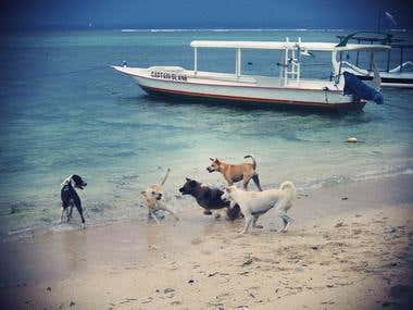 Playtime for Bali dogs