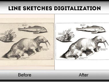 Converting Scanned Line Sketches Images to Digital Drawings