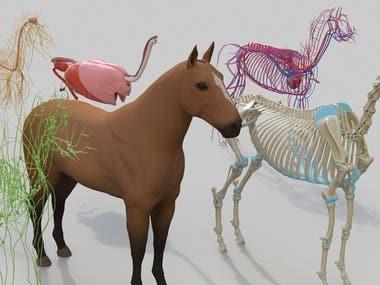 Horse anatomy full 3d model