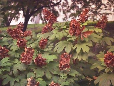 Untitled, Pale Orange Flowers