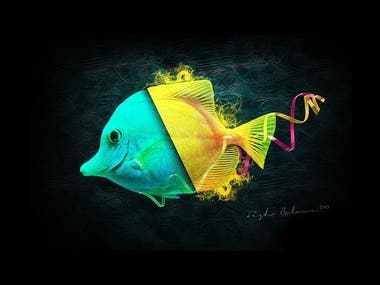 Fish Colour | Digital Art