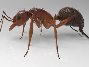 ant 3d design