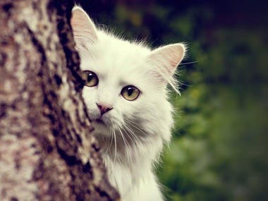 Test Cat Portfolio Item