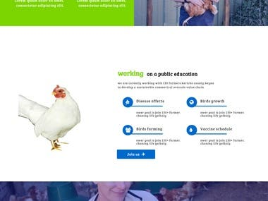 birds/chicken caring
