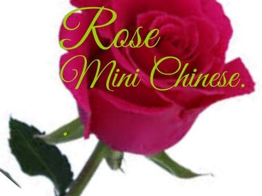 Rose Mini Chinese.