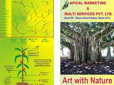 Apical Marketing