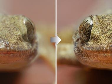Lizard Focus Stacked !
