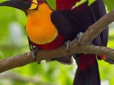 خلفيات طيور الزينة 4k