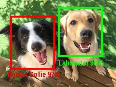 Convolutional Neural Network dog breed classifier