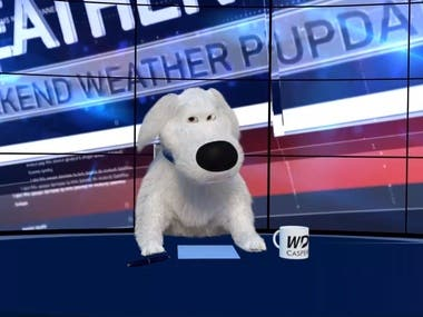 Weather Dog