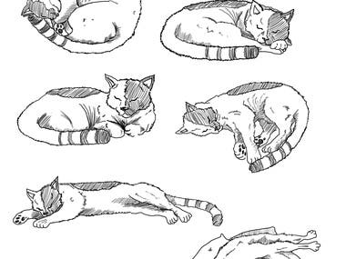 cats for client