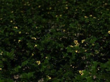 MODO Nature 701 Field