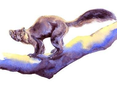 Illustrations with animals