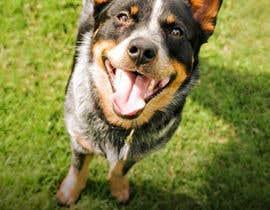 #21 cho Pet Photo Book Cover bởi KarlaFuertez