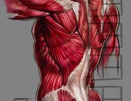 #37 for anatomy art by thunderbirdart