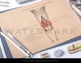 #29 for anatomy art by DenisBors