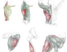 #22 for anatomy art by bulletirde