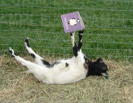 #8 for Great or alter photos showing goats doing funny or human activities by xangerken