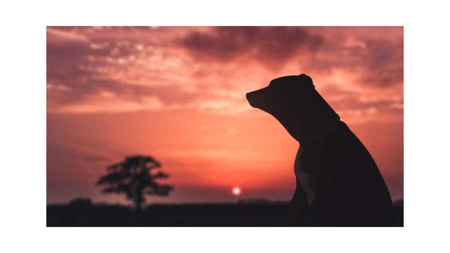 Konkurrenceindlæg #109 for Enhance Dog Photos; Beautifully, Creatively!
