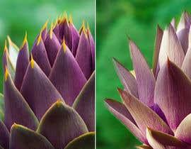 JoaoPedroPereira tarafından Create photo into a whole image of artichoke into a repeat pattern for print için no 5
