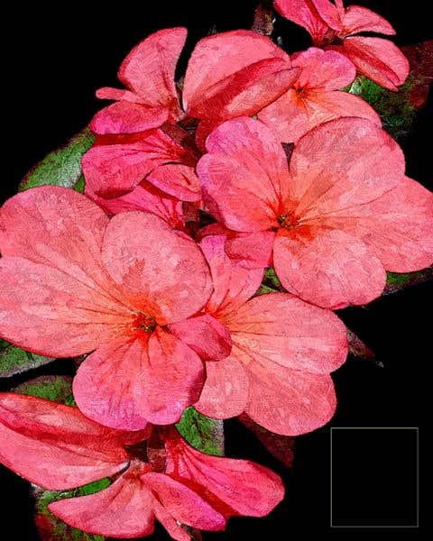 Konkurrenceindlæg #32 for Floral Illustrations