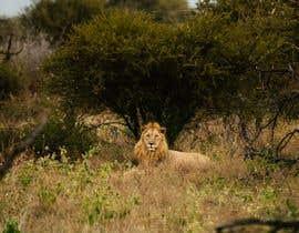 #61 for Lion contest (1) af motchileuterio