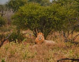 #55 for Lion contest (1) af ihasankazi