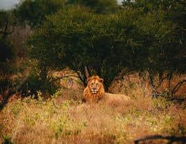 #71 for Lion contest (1) af MonikaBlue