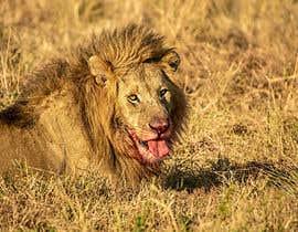 #59 cho Lion contest (5) bởi lalicanbernard