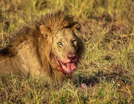 #52 cho Lion contest (5) bởi gianfmartin