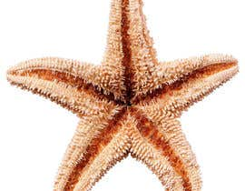 #385 for Design a photo of a star fish by SamehFikry10
