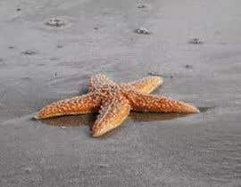 #394 for Design a photo of a star fish by nasro31