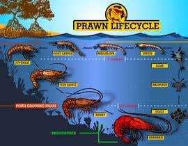 nº 15 pour Illustrate - Prawn Life Cycle par ericgran