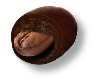 #5 for HD Image of coffee bean coated in chocolate by Batmanci