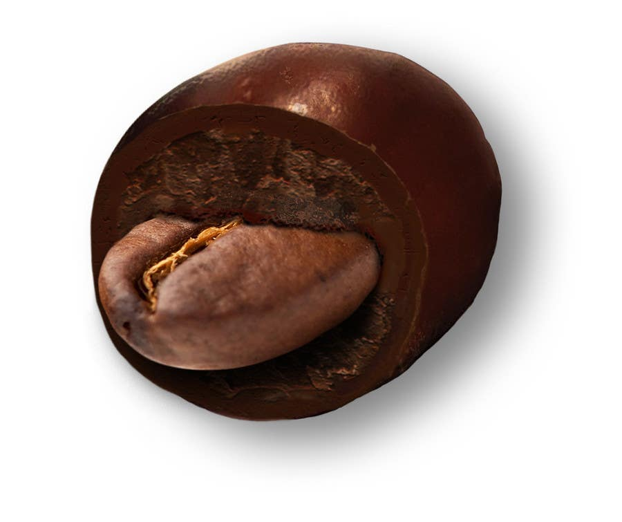 #11 for HD Image of coffee bean coated in chocolate by Batmanci