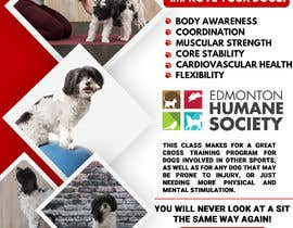 #246 untuk Flyer for my Canine Fitness Training Class oleh mdnaved