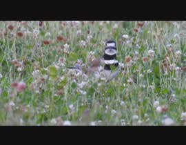 #2 for Create a video    -----   Top 10 most incredible North American birds by hmalimran986