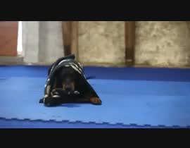 Nro 14 kilpailuun Create a youtube video  -------  100 Animals Being Smart käyttäjältä MHPBA19990