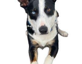 Nro 153 kilpailuun make my dog image background transparent so I can print them on t-shirts, socks, shorts, etc. käyttäjältä CesarP24